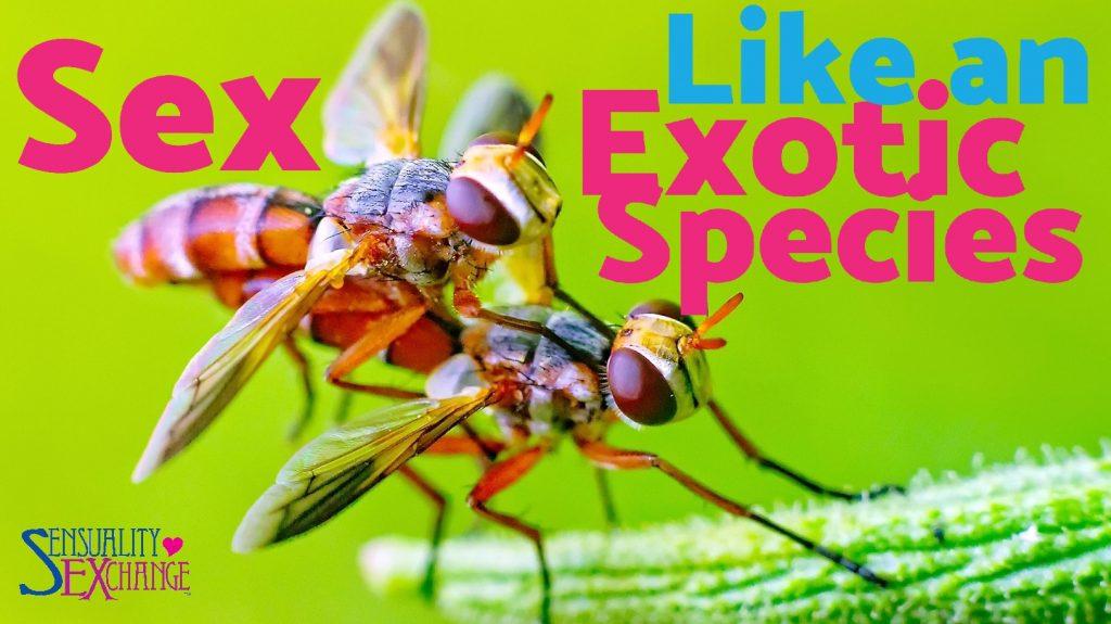 Exotic Sex